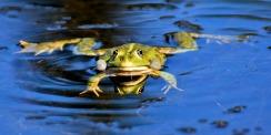 frog-3509388_1920