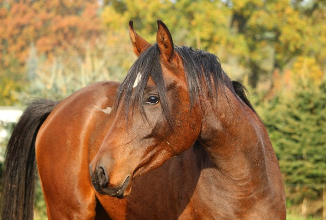 horse-1024716_1920